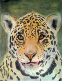 Jaguar, Tiere, Portrait, Zeichnungen