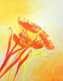 Rot, Blumen, Gelb, Licht