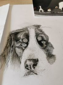 Tropfen, Zeichnung, Hund, Anfang