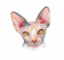 Katze, Falten, Augen, Nase