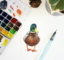 Ente, Aquarellmalerei, Illustration, Aquarell