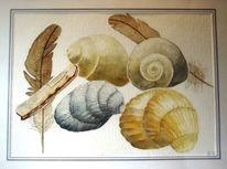 Muschel, Natur, Feder, Aquarellmalerei