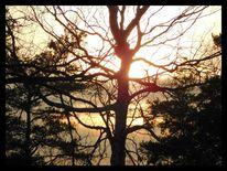 Baum, Erwachen, Äste, Nachmittag