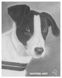 Hundeportrait, Hund, Zeichnung, Bleistiftzeichnung
