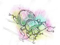 Insekten, Käfer, Aquarellmalerei, Nebenbeigekritzel