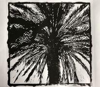 Lichtspiel, Palmen, Pflanzen, Curacao