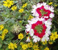 Rabatt, Rot, Pink, Blumen