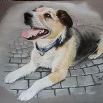 Portrait, Hund, Pastellmalerei, Tierportrait