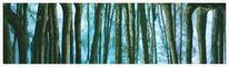 Wasser, Spiegelung, Farben, Malerei