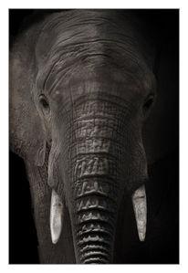 Portrait, Afrika, Tiere, Wild