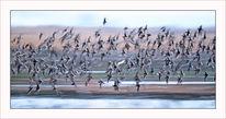 Malen, Kampfläufer, Vogel, Natur