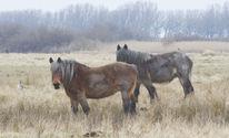 Natur, Pferde, Licht, Fotografie