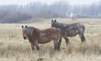 Pferde, Licht, Fotografie, Nebel