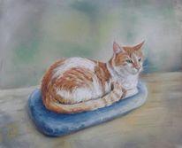 Katze, Pastellmalerei, Zeichnungen