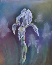 Pastellmalerei, Garten, Iris, Zeichnungen