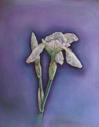 Pastellmalerei, Schwertlilie, Blumen, Zeichnungen