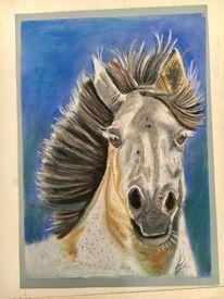 Pferde, Schimmel, Pastellmalerei, Zeichnungen
