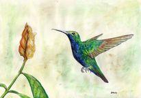 Leichtigkeit, Kolibri, Bunt, Blumen
