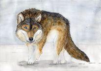 Wolf, Spirituell, Tiere, Krafttier