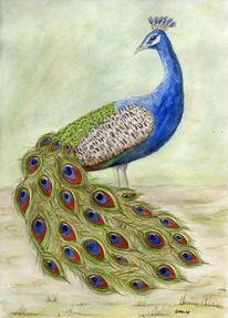 Bunt, Blau, Vogel, Grün