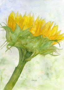 Blüte, Pflanzen, Sommer, Sonnenblumen