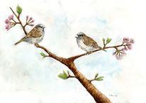 Vogel, Zierkirsche, Singvogel, Frühlingsboten