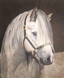 Tiere, Pferde, Portrait, Pferdekopf