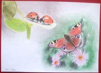 Marienkäfer, Schmetterling, Zeichnung, Buntstifte