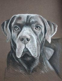 Hund, Pastellmalerei, Tierzeichnung, Zeichnungen