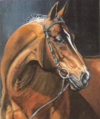 Pferde, Reiten, Tierportrait, Tiere