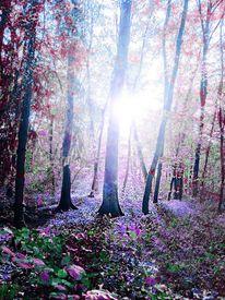 Träumerisch, Natur, Farben, Halluzinogen