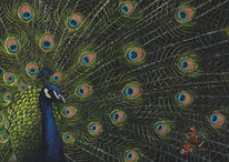 Malerei, Natur, Pfau, Tiere