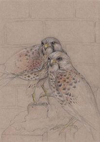 Turmfalken, Natur, Vogel, Buntstiftzeichnung