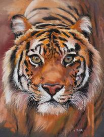 Tierwelt, Katze, Streifen, Orange