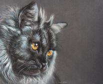 Katze, Grau, Blau, Fell
