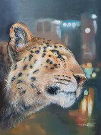 Licht, Leopard, Bokeh, Großkatze