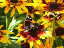 Garten, Sommer, Schmetterling, Natur