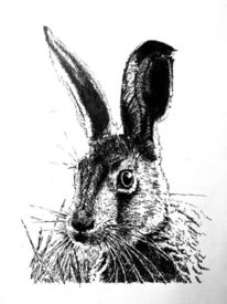 Illustration, Hase, Wiese, Tiere