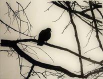 Vogel, Monochrom, Himmel, Natur