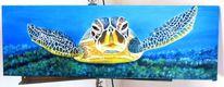 Tiere, Schildkröte, Meer, Meeresgrund