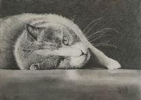 Katze, Liegend, Bleistiftzeichnung, Zeichnungen