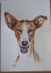 Galgo, Buntstiftzeichnung, Hund, Lachen