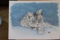 Bett, Katze, Pastellmalerei, Blau
