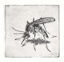 Insekten, Mücke, Nahrung, Schmerz