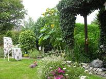 Fremd, Kaninchen, Garten, Fotografie