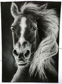 Pastellmalerei, Weiß, Pferde, Liebe