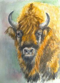Bison, Wisent, Tierportrait, Aquarellmalerei