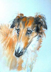 Hundeblick, Aquarellmalerei, Windhund, Tierportrait