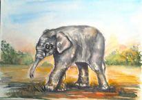 Tiere, Elefant, Landschaft, Tierportrait