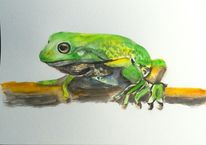 Tiere, Aquarell tiere, Sommer, Frosch